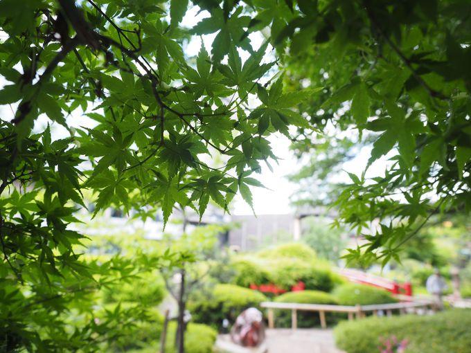 ホテルニューオータニで青もみじと秘密のバラ園を楽しむ