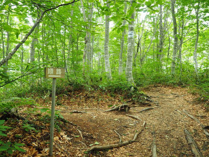 ヒーリング効果たっぷりのお散歩コース「ねずこの森」