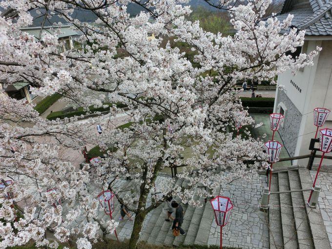 桜と紅葉が彩る季節には、さすが歴史ある古城の貫録!