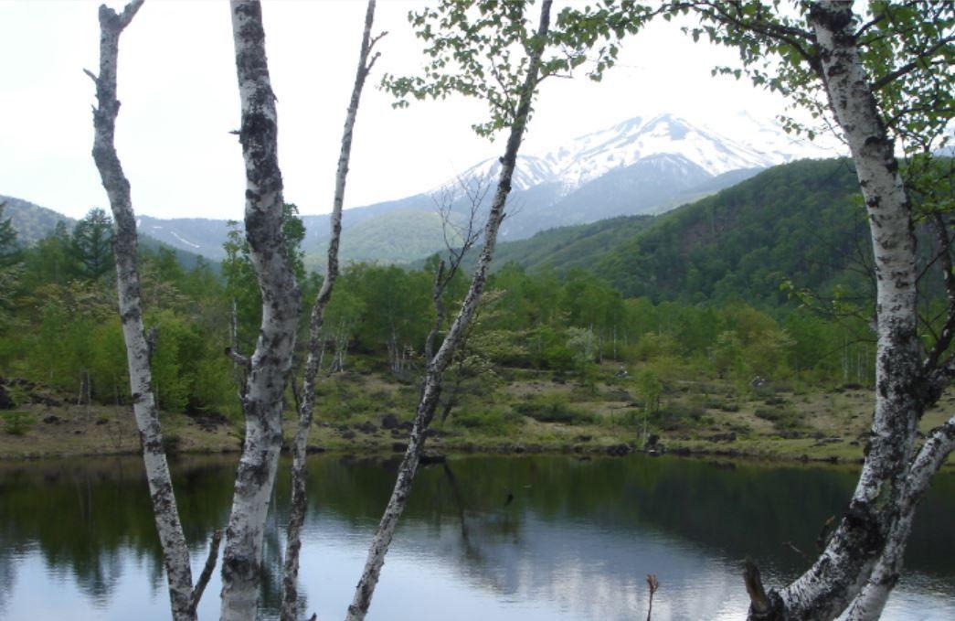 白樺が点在する大草原・大湿原の「一の瀬園地」