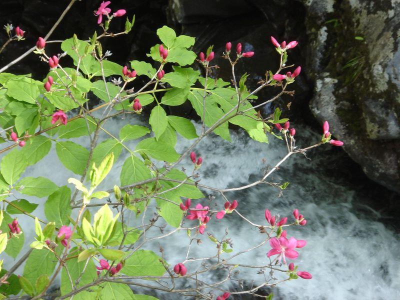 白樺と青空、湿原と清流、花咲く乗鞍高原へハイキングに行こう!