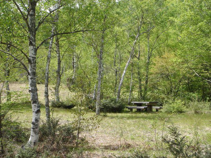 自然のままの「一の瀬キャンプ場」