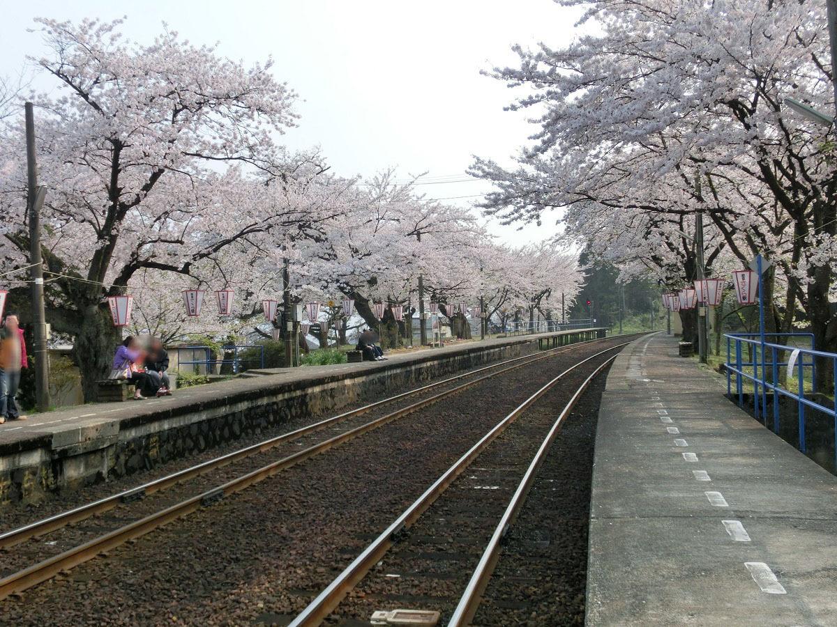 桜の季節に訪れたい!「なかじま猿田彦温泉 いやしの湯」