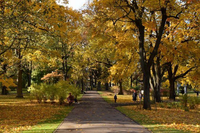 自然環境に恵まれた緑豊かな公園