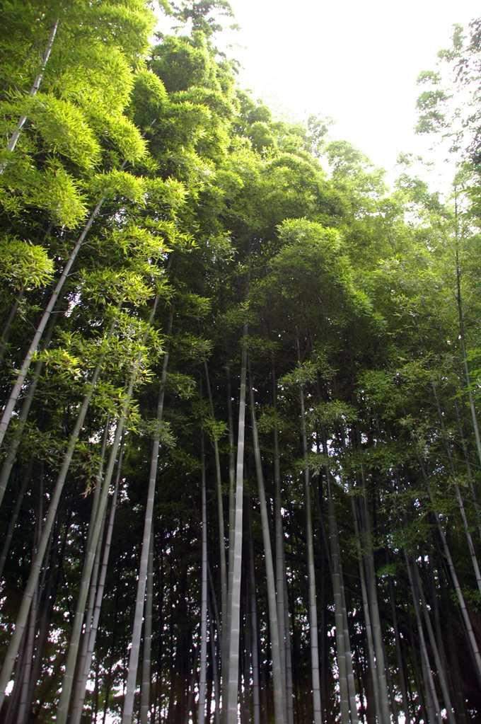 広い庭には竹林も