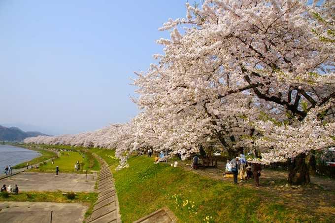 一度は見たい、角館の桜