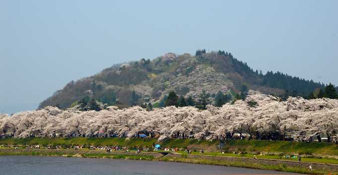 2.桧木内川堤の桜並木/角館町