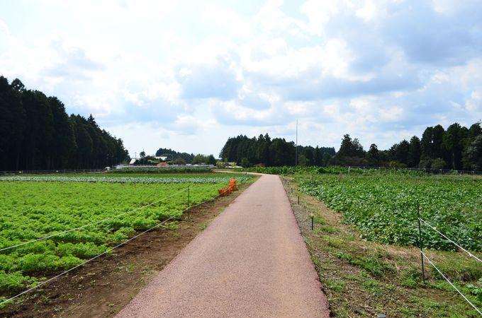 収穫体験、ジップスライダー、自然と遊ぼう!