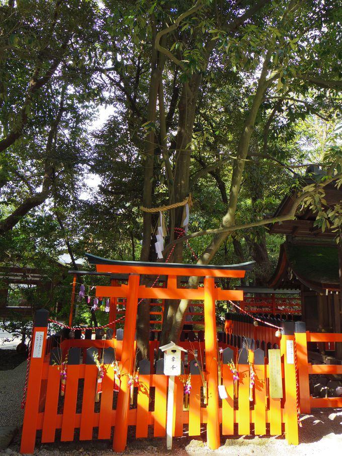 5.パワーを持つ木、下鴨神社の「連理の賢木(れんりのさかき)」