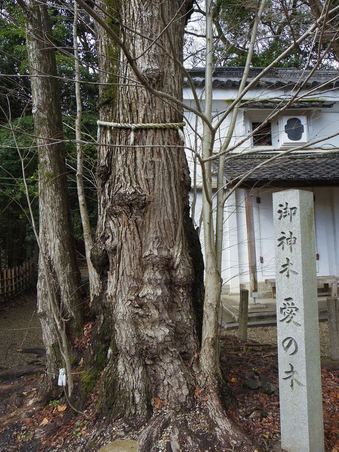 4.パワーを持つ木、梨木神社の 「愛の木」