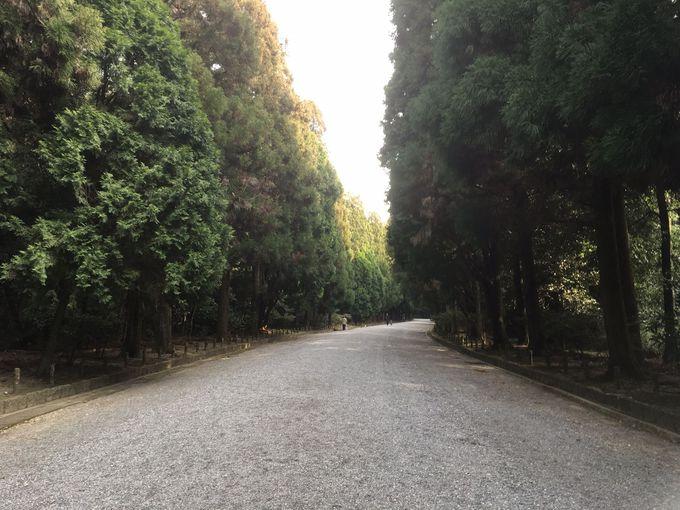 陵まで続く杉並木。マイナスイオンに癒される!