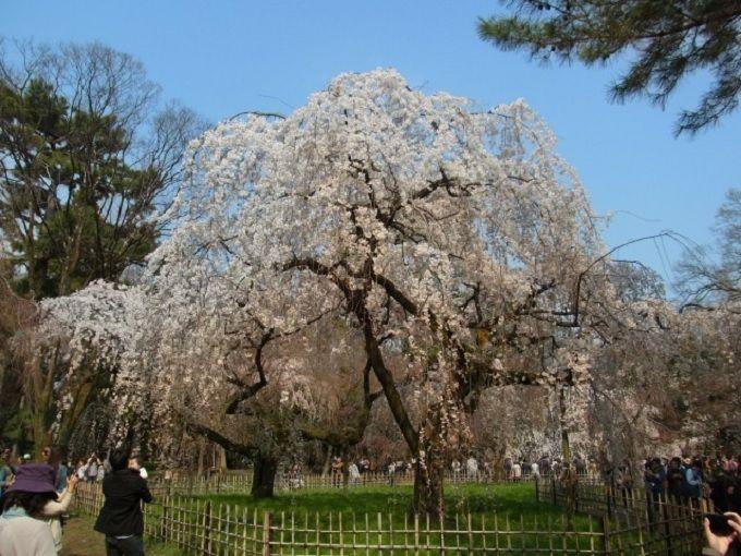 春は梅、桃、桜の花々が、秋は紅葉が楽しめます。