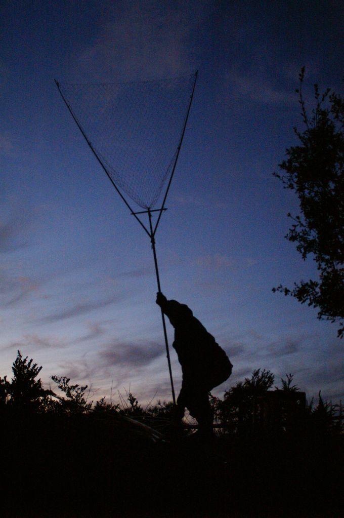 飛ぶカモに網を投げてとらえる古式猟法の「坂網猟」