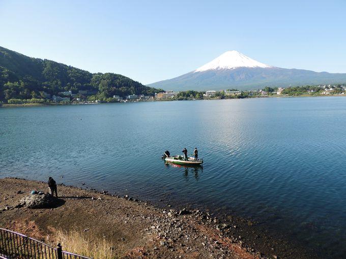 湖畔の遊歩道を散歩しながら富士山を愛でる