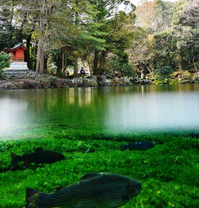 パワーみなぎる湧水スポット「湧玉池」