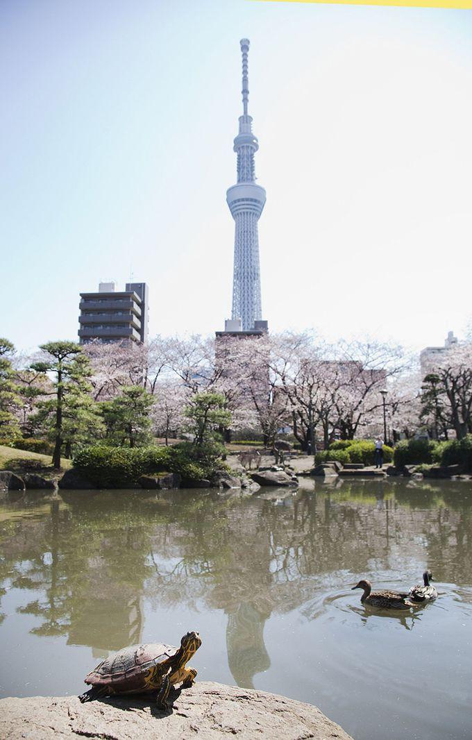 水戸徳川家の下屋敷跡だった風情あふれる「隅田公園」の日本庭園