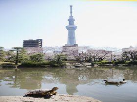 東京スカイツリーのお膝元「隅田公園」は江戸情緒の宝庫