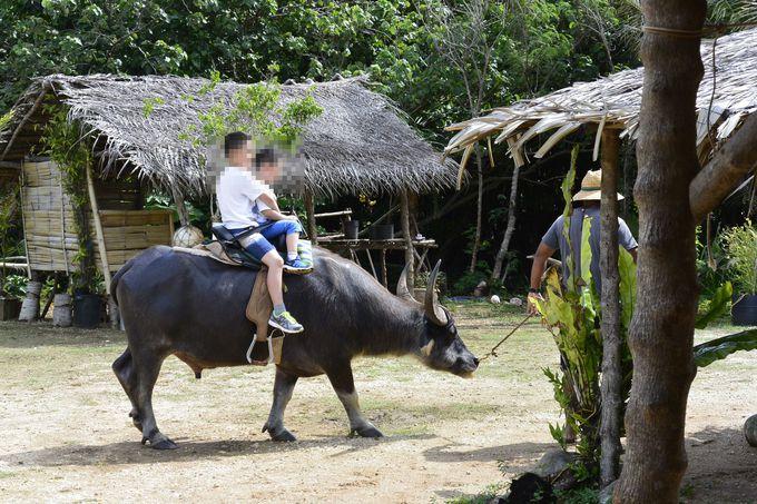 水牛やヤシガニなど珍しい動物との遭遇も楽しみ