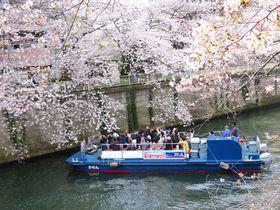 東京・目黒川のお花見クルーズで悠々水上遊覧へ