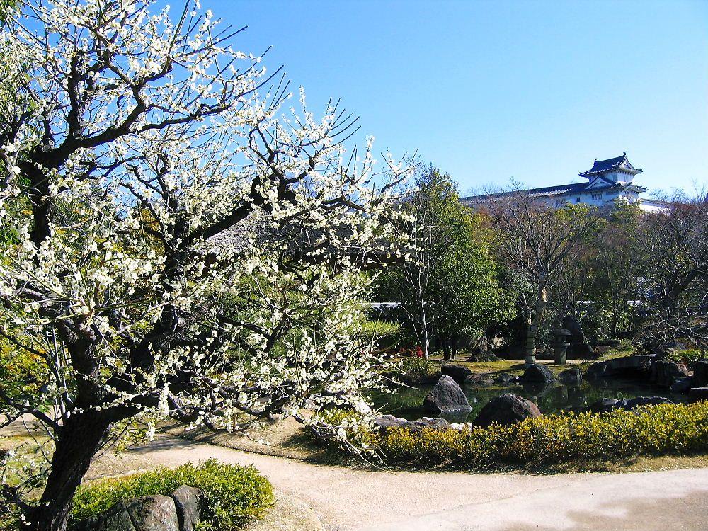 姫路城西御屋敷跡庭園「好古園」梅や桜が咲く大人の花見スポット