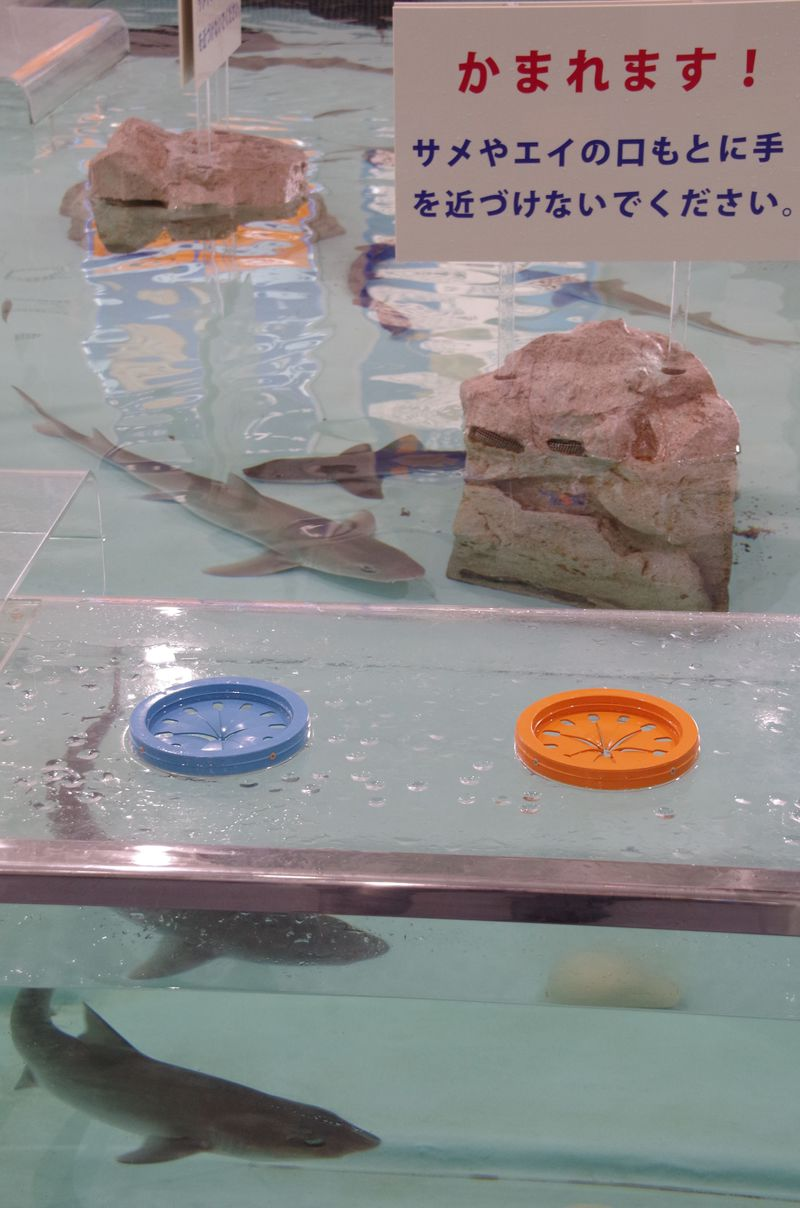サメの肌は鮫肌だった!?大人も童心に返る「姫路市立水族館」