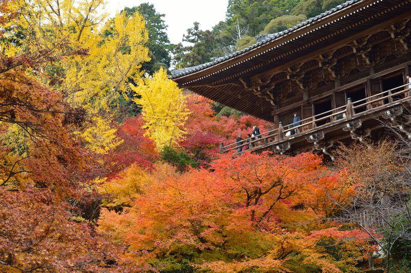 書写山円教寺で感じる姫路の秋、紅葉が彩る悠久の古刹へ