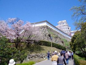 2019年春の姫路城、観桜会や夜桜会などイベント盛りだくさん!