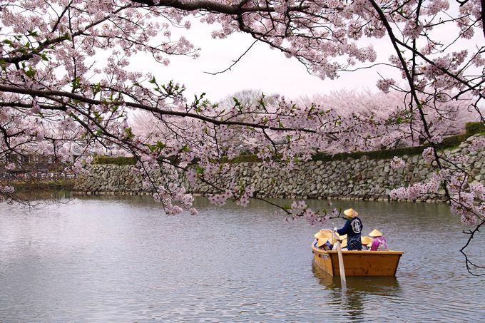 6.姫路城イベントガイド 観桜会や夜桜会など