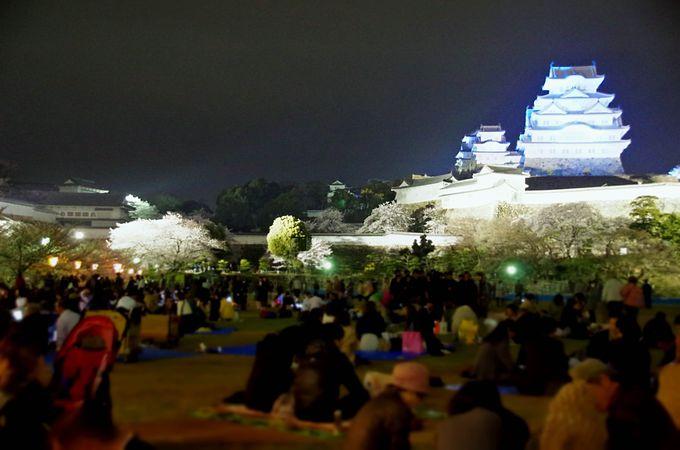 姫路城夜桜会は西の丸庭園を無料開放