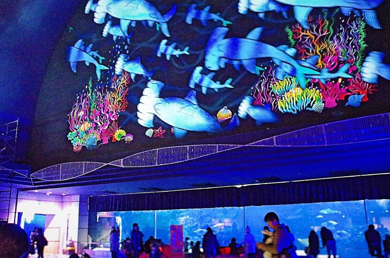 冬の神戸はイルミネーション輝く須磨海浜水族園へ!神戸須磨アクアイルミナージュ