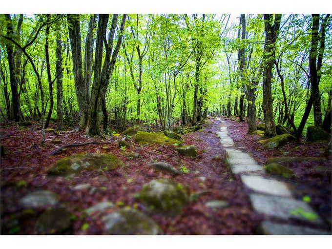 美しい自然に感動、映画スタッフも認めたリラクシアの森