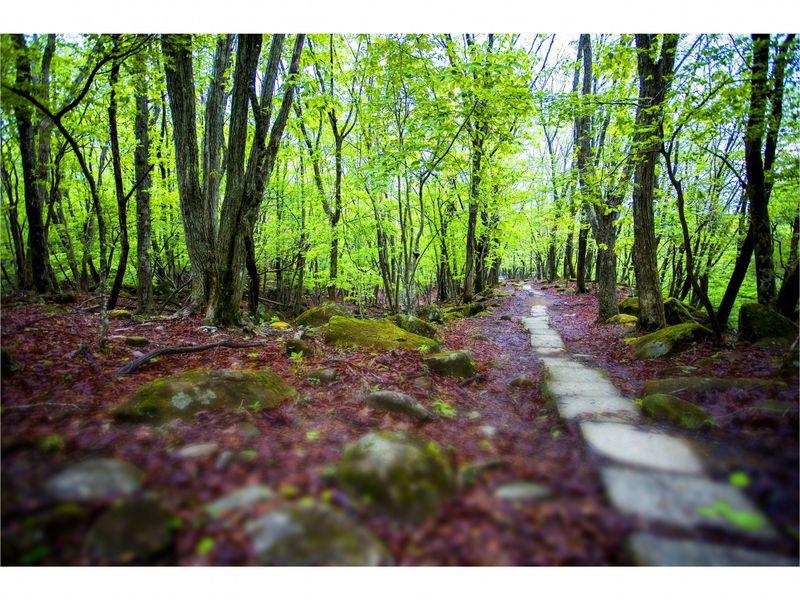 ノルウェイの森やドラマのロケ地 兵庫「峰山高原ホテルリラクシア」