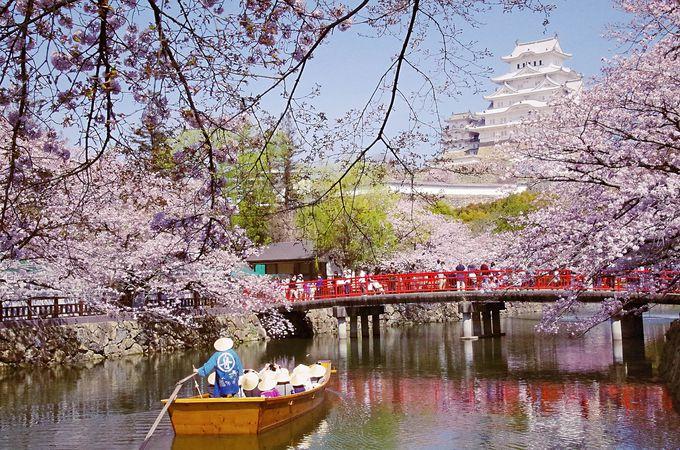 「お城の見える動物園」姫路市立動物園内も桜の名所