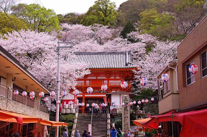紀三井寺の表坂、桜の階段「結縁坂」