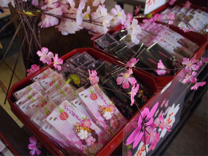 ゆっくり桜を観賞したいなら裏参道がオススメ
