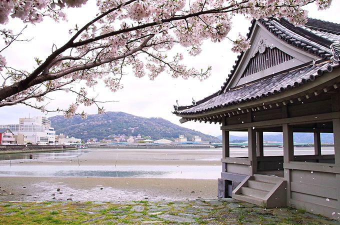 旧和歌浦湾越しに望む桜の紀三井寺