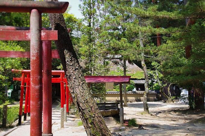 真の忍者と忍者屋敷がある「伊賀流忍者博物館」はどこに?