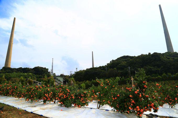 高さ136メートル、圧倒される高さの無線塔