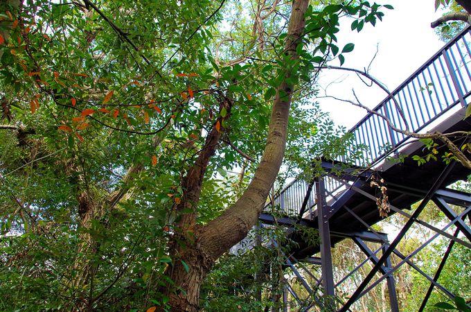 空中遊歩道「樹冠トレイル」で実地体験