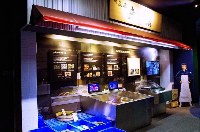 琵琶湖の全てを知りたいなら「びわ博」へ