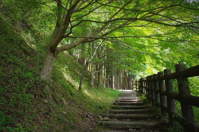 プラン2:もうひとつの王道スポット熊野古道