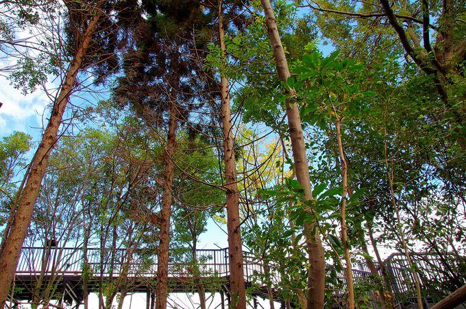 森を高いところから楽しむ空中遊歩道、樹冠トレイル最大の魅力