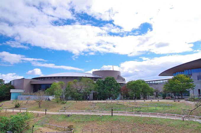 琵琶湖博物館の悲願、樹冠トレイル誕生