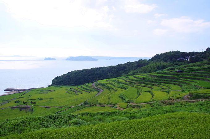 松浦市一の棚田の風景も楽しもう