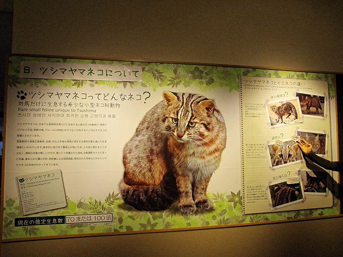 ツシマヤマネコに会いに対馬野生生物保護センターへ行こう