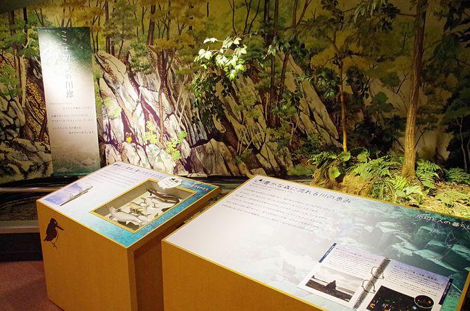 対馬野生生物保護センターの展示内容にも注目