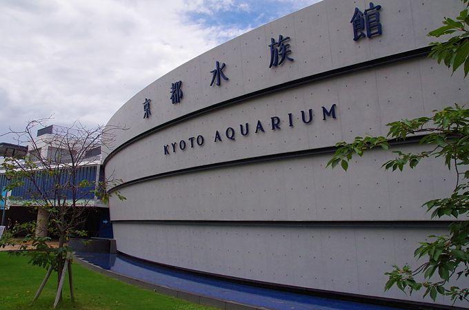 京都水族館のクラゲ愛が満載の大規模リニューアル
