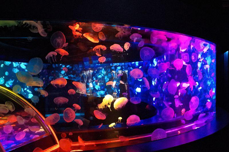 クラゲの世界に包まれる、360度パノラマ水槽「GURURI」