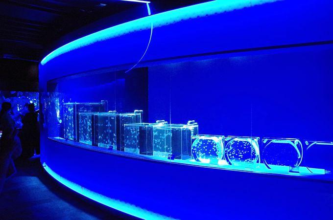 西日本最大規模のクラゲ展示エリア「クラゲワンダー」