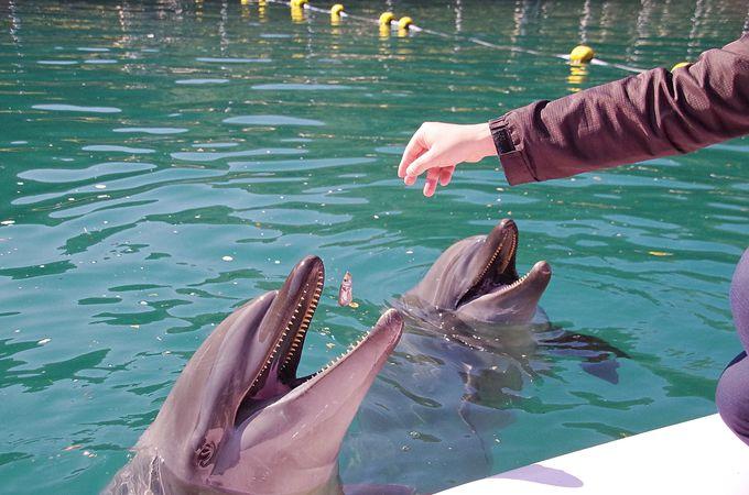 イルカと一緒に楽しむプログラムの数々